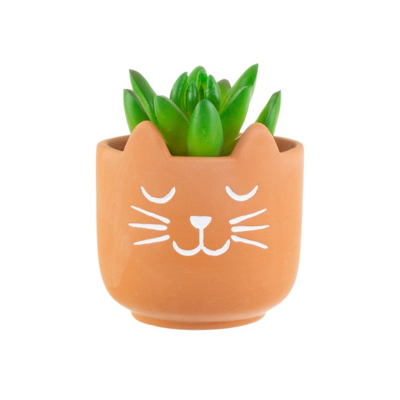 Mini Cat's Whiskers Terracotta Planter 3